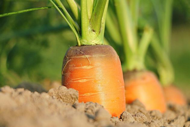 Pesticides : 80 tonnes de produits interdits répandues surles cultures