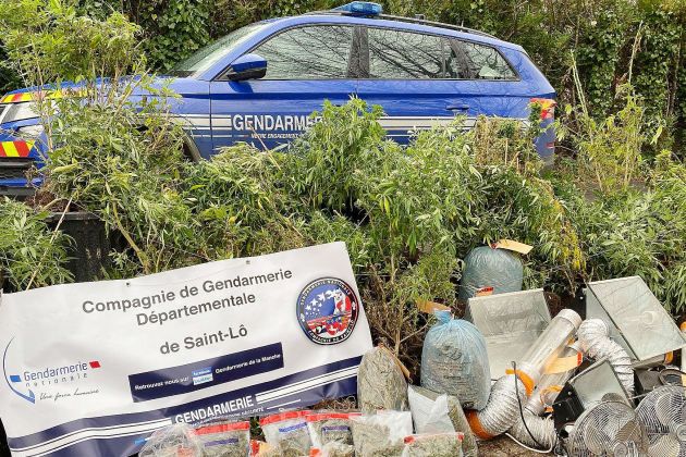 Plusieurs cultures de cannabis mises au jour par les gendarmes