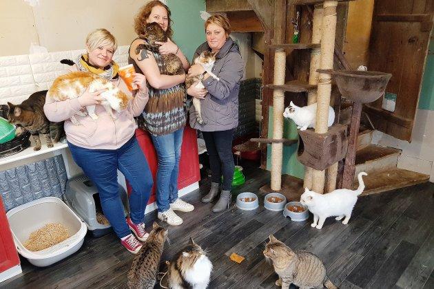 Copains de Paulo: maison de retraite pour chats