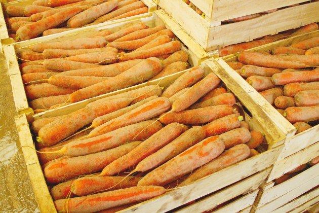 Pesticides: les maraîchers contestent l'ordre de destruction des récoltes