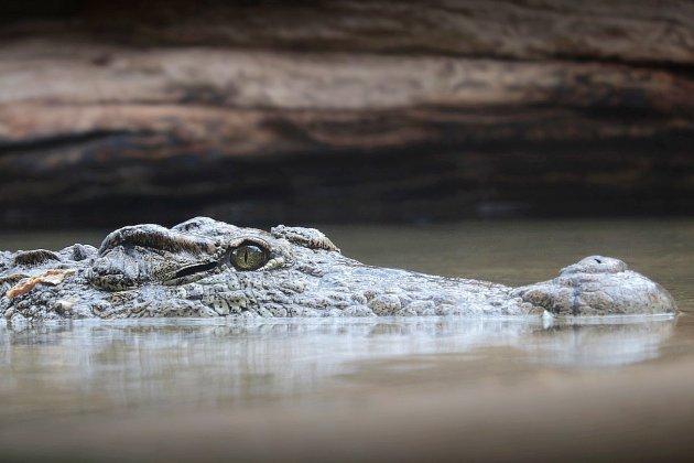 Un Australien passe leNouvel An cerné par les crocodiles