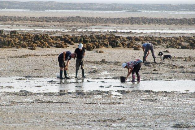 Interdiction temporaire de la pêche à pied à la pointe du Siège