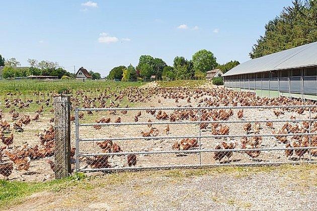 Grippe aviaire: les recommandations de la préfecture