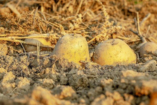 Une promeneuse anglaise tombe sur des restes humains : c'était en fait...