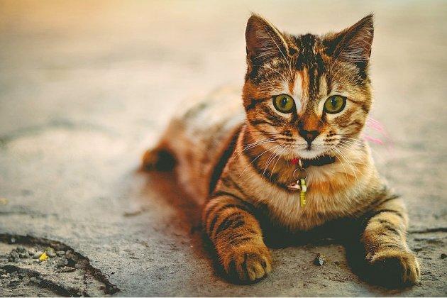 """Proposition de loi sur la maltraitance animale: """"On va dans le bon sens"""""""