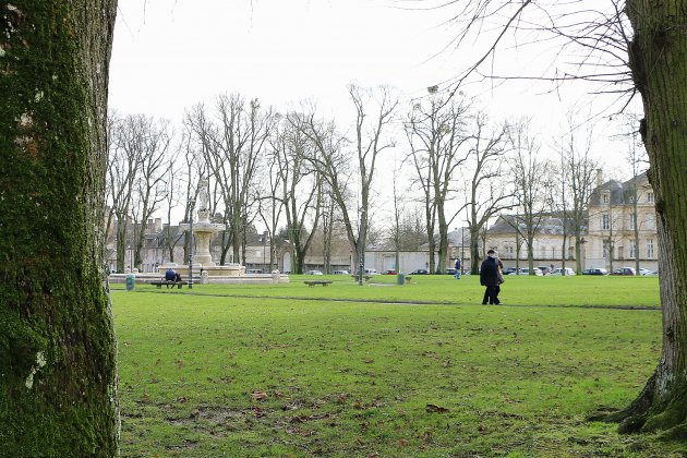 Les 33 tilleuls en fin de vie de la place de Gaulle seront abattus en mars