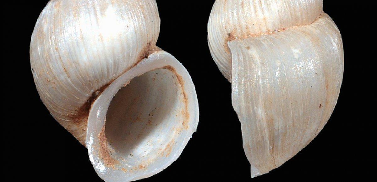 Une nouvelle espèce d'escargot dont le nom s'inspire de Novak Djokovic