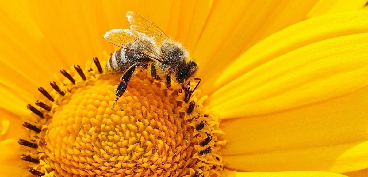 To bee or not to bee: une exposition autour des abeilles