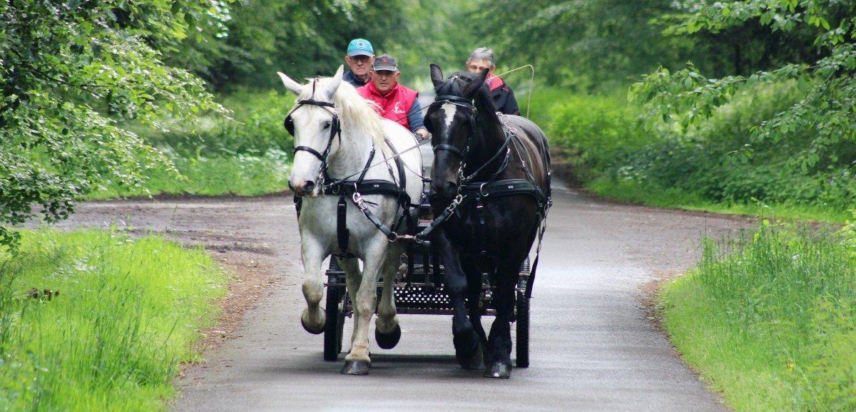 La Perrière. Visitez l'Orne avec des chevaux percherons