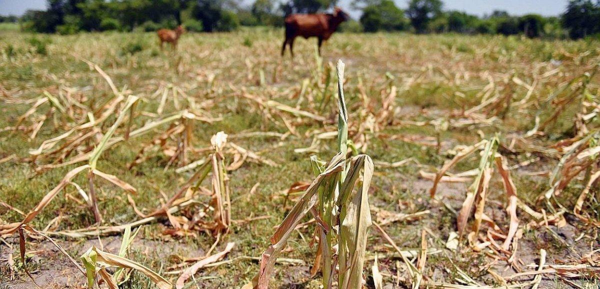 Sécheresse. La MSAdébloque plus de 150 000€ pour les agriculteurs ornais
