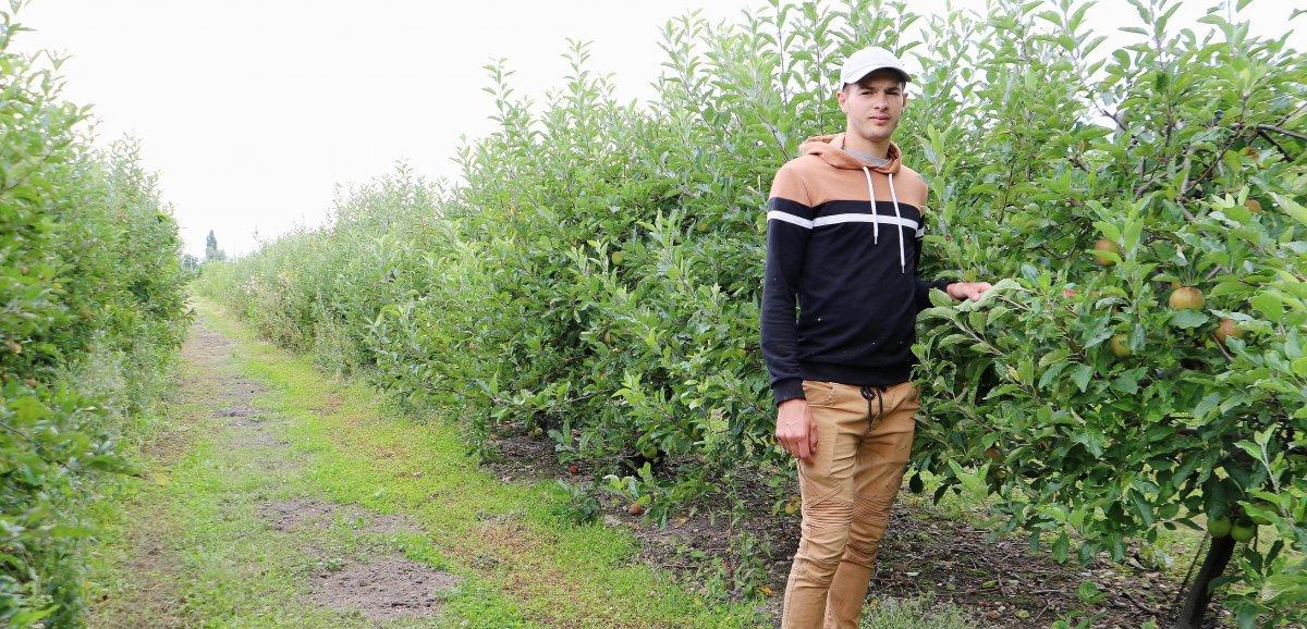 Seine-Maritime. Une année catastrophe pour les pommes