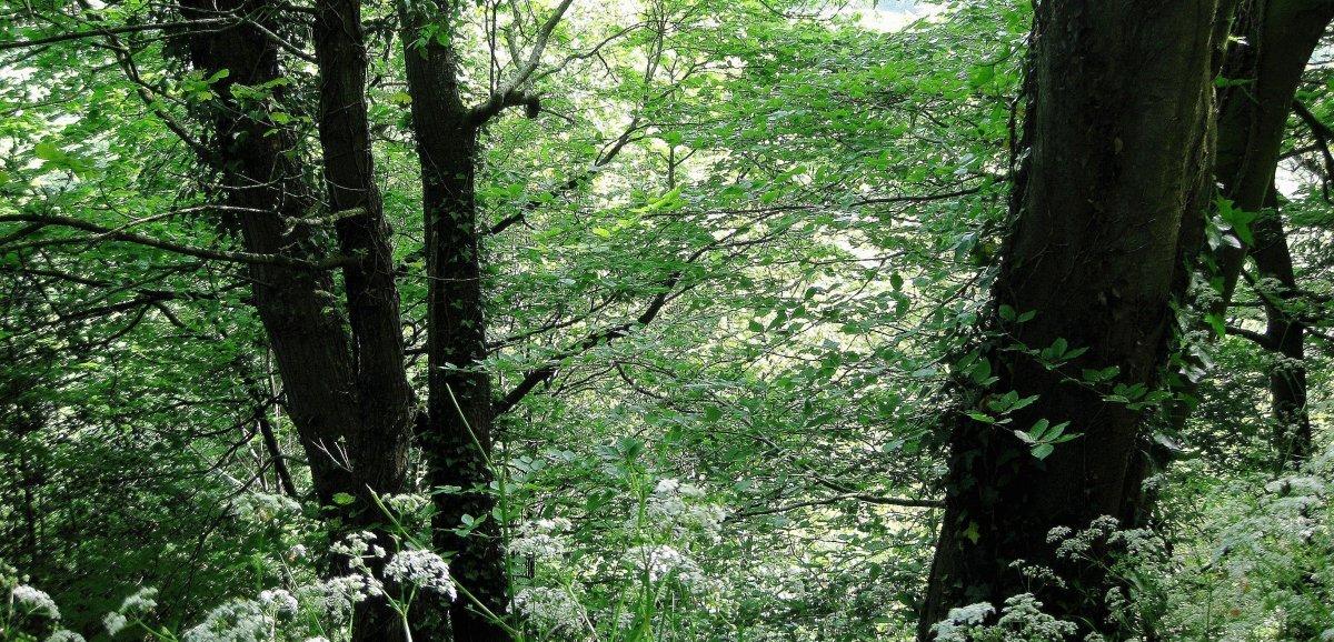 Près de Rouen. Une équipe spécialisée mobilisée pour la chute d'une jeune femme en forêt