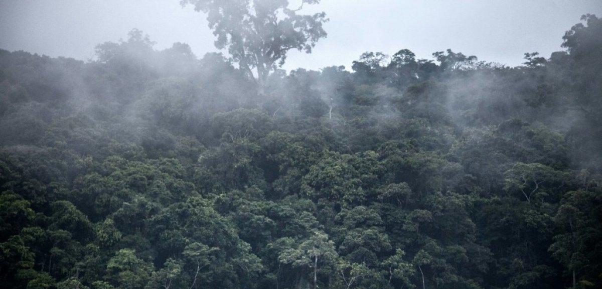 Evaluer et financer le stockage de CO2: la forêt gabonaise en exemple