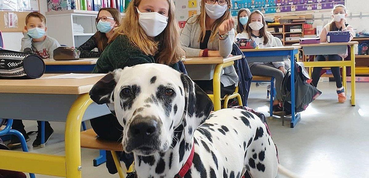 Orne. A l'école ou à l'hôpital, le chien devient héros