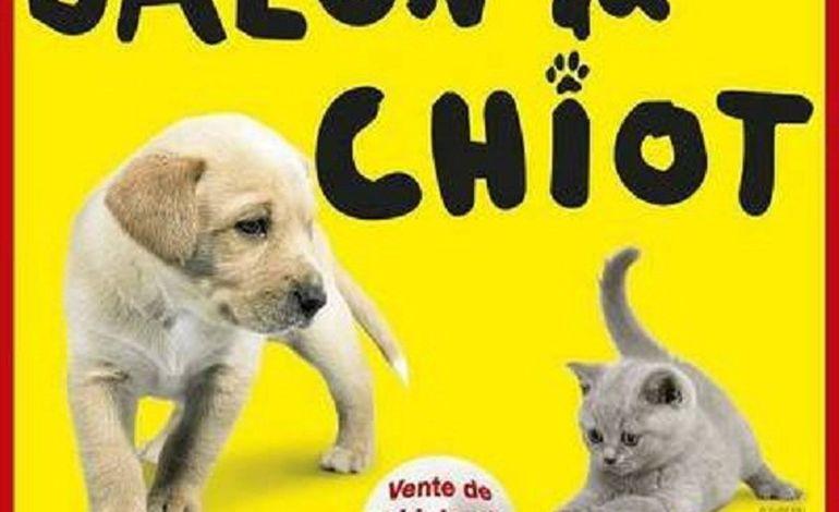 Salon du chiot et de l 39 animal de compagnie caen - Salon du chiot brest ...
