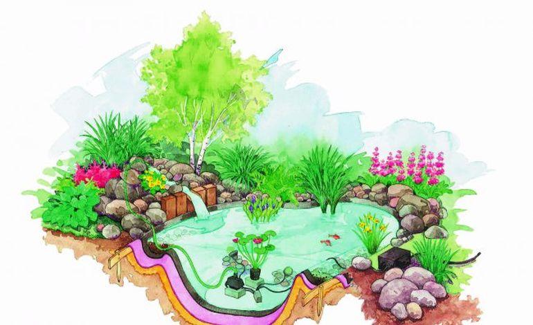 Et si vous créiez un bassin dans votre jardin ?