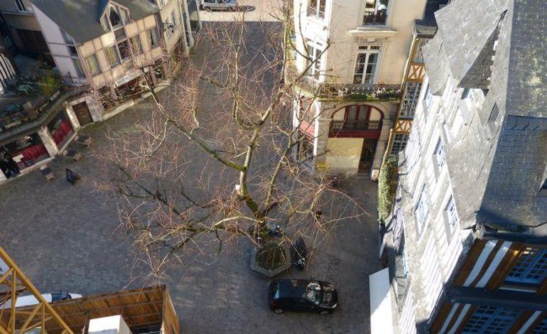 Rouen : levée de boucliers autour de l'arbre de Saint-Maclou