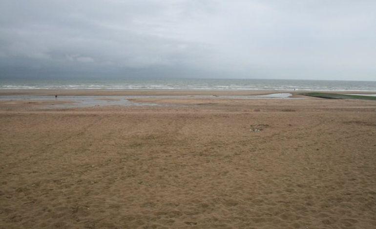 Un dauphin mort s'échoue sur une plage de Villers-sur-Mer