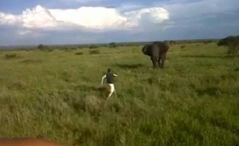 Vidéo : homme vs éléphant un duel au sommet