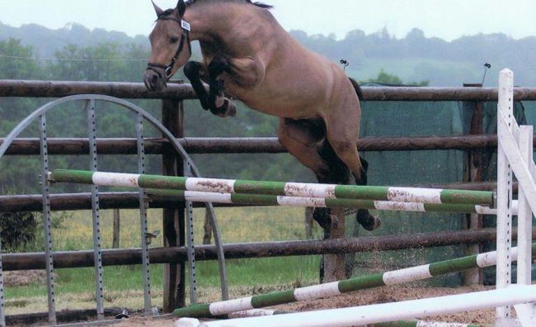 Concours pour les poneys de 3 ans au Haras du Pin