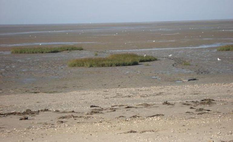 Un groupe de cavaliers pris au piège dans la baie des Veys