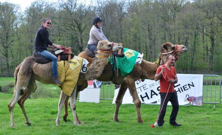 Bagnoles de l'Orne : la fête de la chasse, du cheval et du chien se prépare