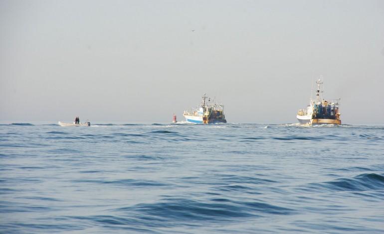 Les chalutiers pélagiques privés de pêche au bar