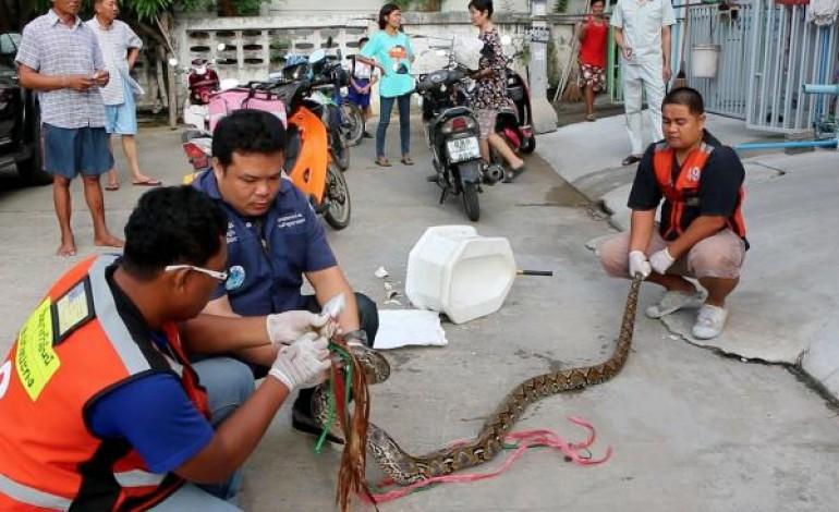 VIDEO. Un python surgit de ses W.C, il se fait mordre violemment