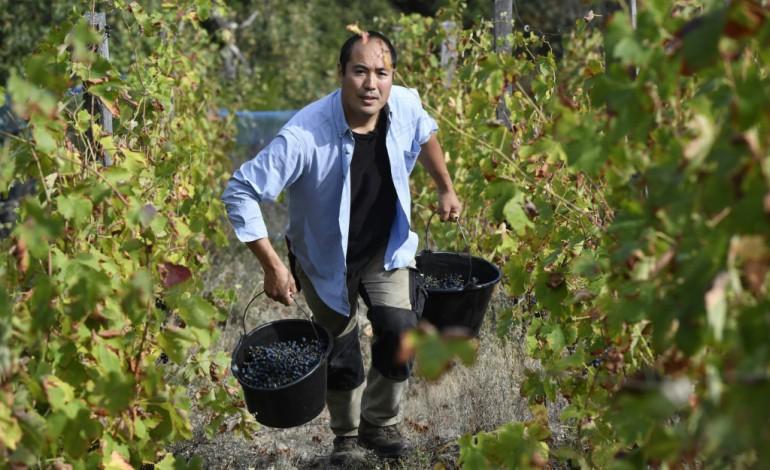 Dans les vignes françaises, un Japonais laisse faire la nature