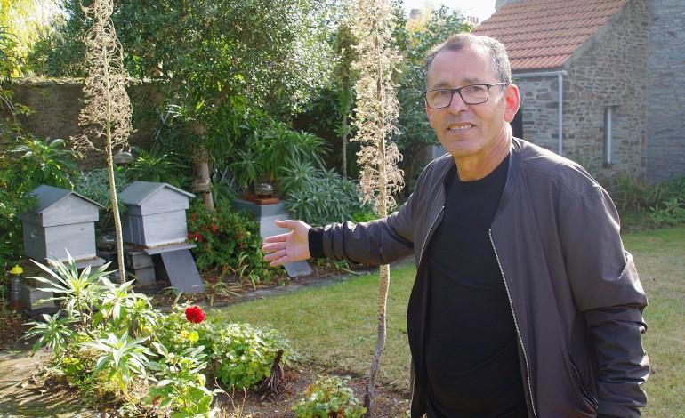 Insolite : à Cherbourg, il élève des ruches en ville