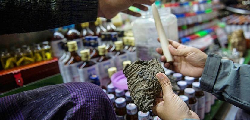 Des remèdes à base de peau d'éléphants, nouvelle mode en Birmanie