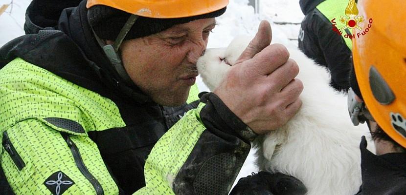 Avalanche en Italie: le sauvetage de trois chiots redonne espoir