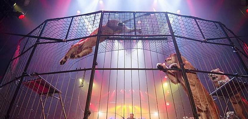 Arlette Gruss: un cirque étonnant à Rouen!