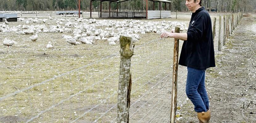 """Grippe aviaire: dans les Landes, """"on les aime nos canards"""""""