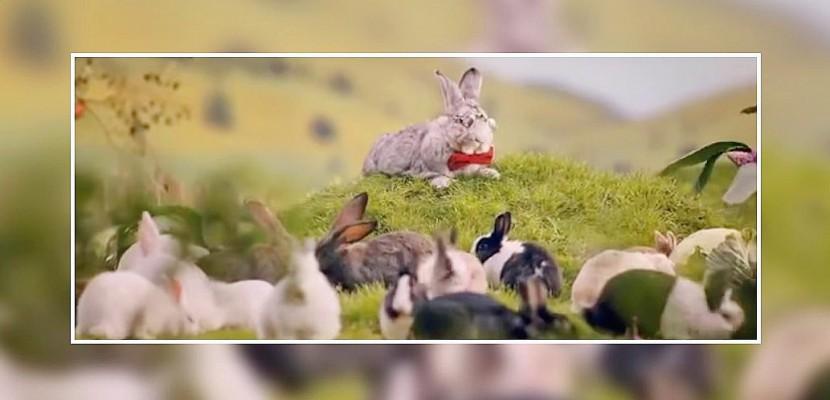 """Le gouvernement de Pologne invite ses citoyens à """"se multiplier comme des lapins"""""""