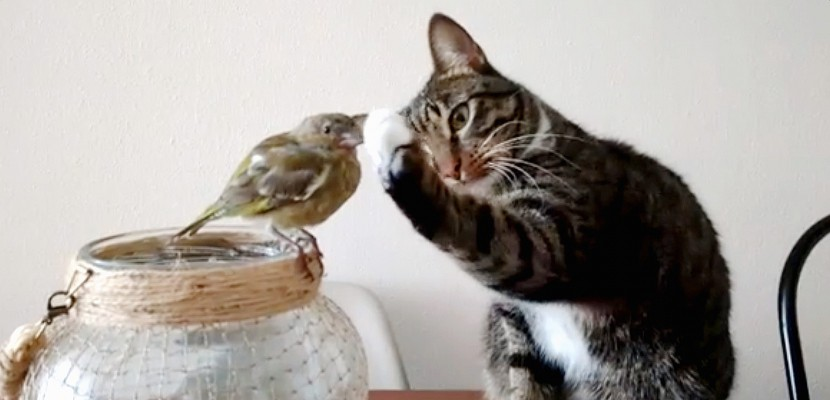 Un chat caresse doucement un oiseau