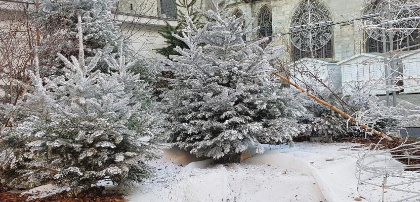 Un sapin de Noël d'une commune de l'Orne vandalisé