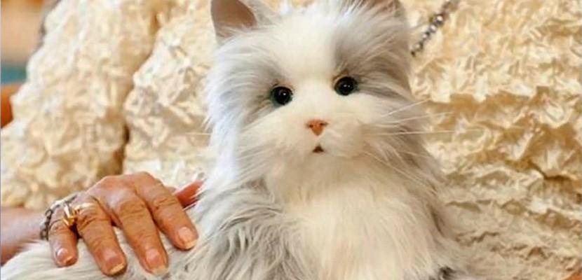 Hasbro envisage de créer un chat robotisé pour...seniors!