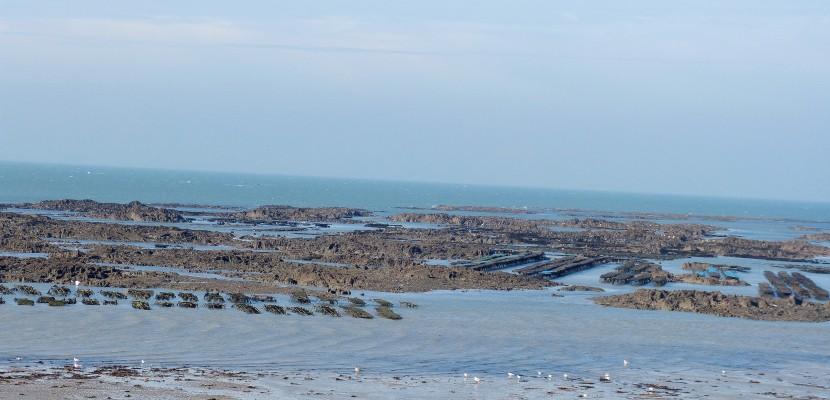 Pêche à pied sur le littoral de la Manche: restrictions et interdictions en 2018