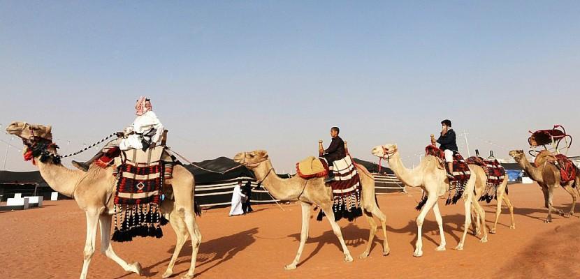 Dans un concours saoudien de chameaux, la beauté sans botox