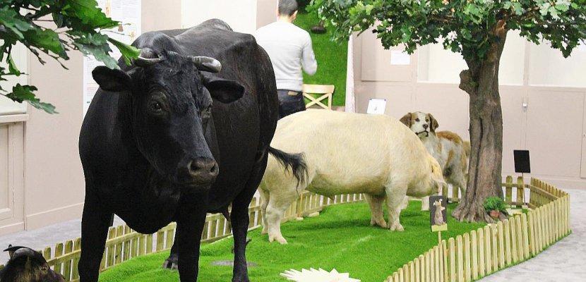 Rouen : la petite taupe mène l'enquête au Muséum d'histoire naturelle