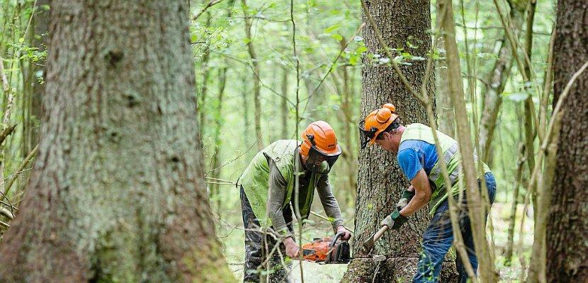 Forêt de Bialowieza: la Pologne a enfreint la loi européenne