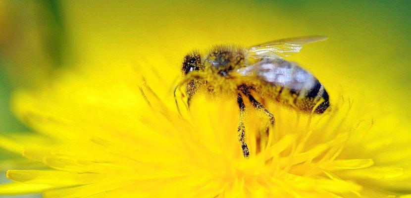 Pesticides: l'UE bannit les néonicotinoïdes pour sauver les abeilles
