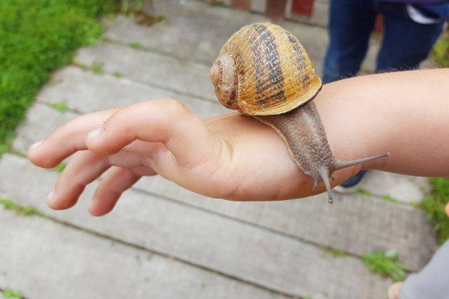 Insolite: découvrez les secrets des escargots, près de Caen