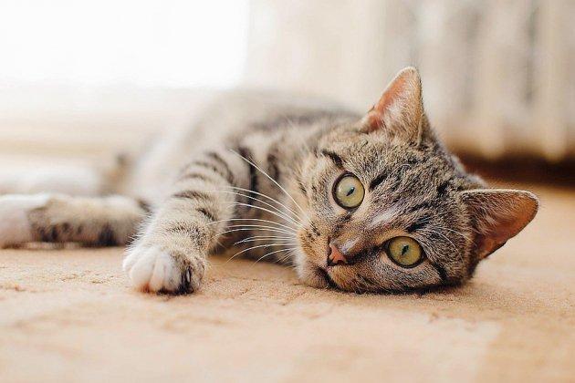 Caen: le tortionnaire des chats condamné à un an de prison supplémentaire