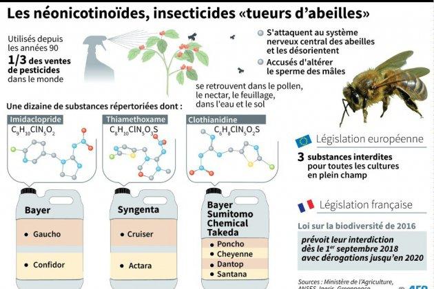 Abeilles: cinq néonicotinoïdes interdits à partir de septembre