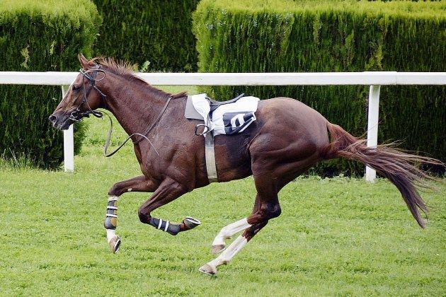 Manche: un entraîneur de chevaux interpellé pour soupçons de dopage
