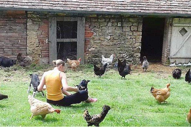 Près d'Alençon, mettez vos poules en pension!