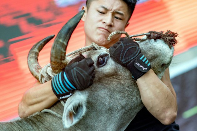 En Chine, des pros du kung fu défient les taureaux dans l'arène