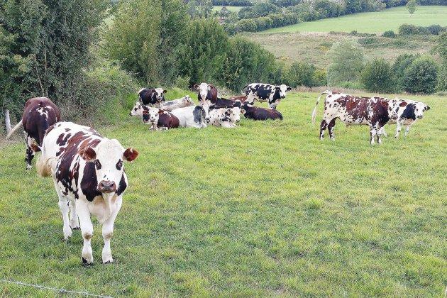 750 cheptels ornais contrôlés de la tuberculose bovine